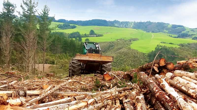 Tom Harrison and Sons Logging: family in forestry