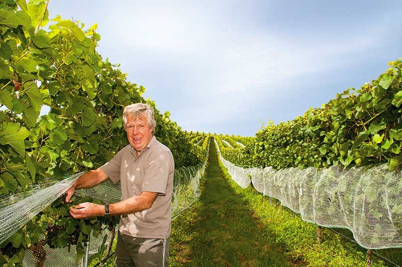 Viticulture: Lime Rock Wines