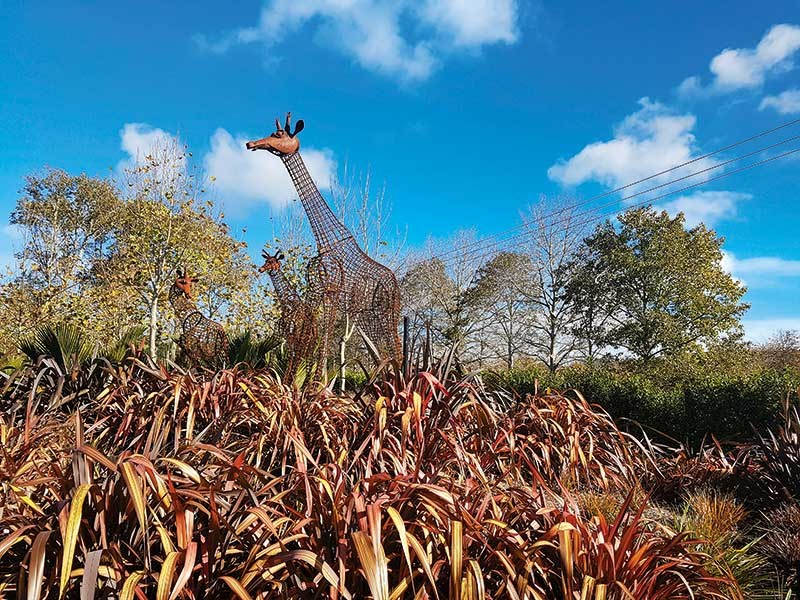 Iron giraffe sculptures