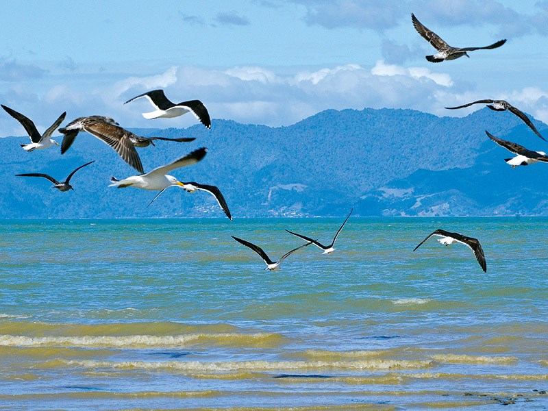 Bird watching on the Miranda coast