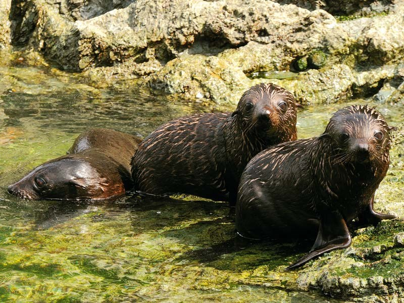 A Wairarapa road trip: fur seals and other highlights