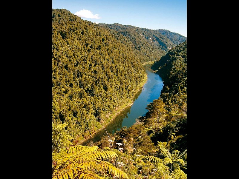 A drive up the Whanganui River Road