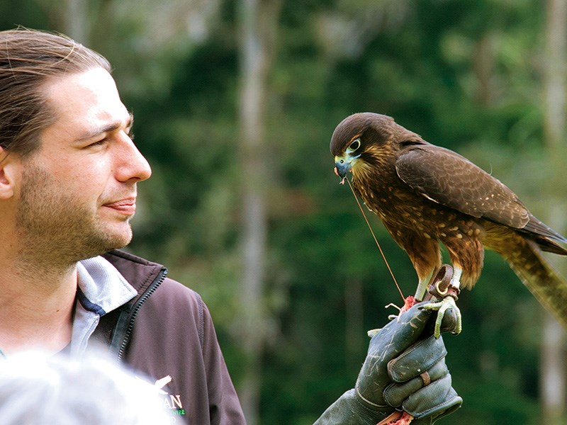 A wing and prayer: a visit to the Wingspan National Bird of Prey Centre