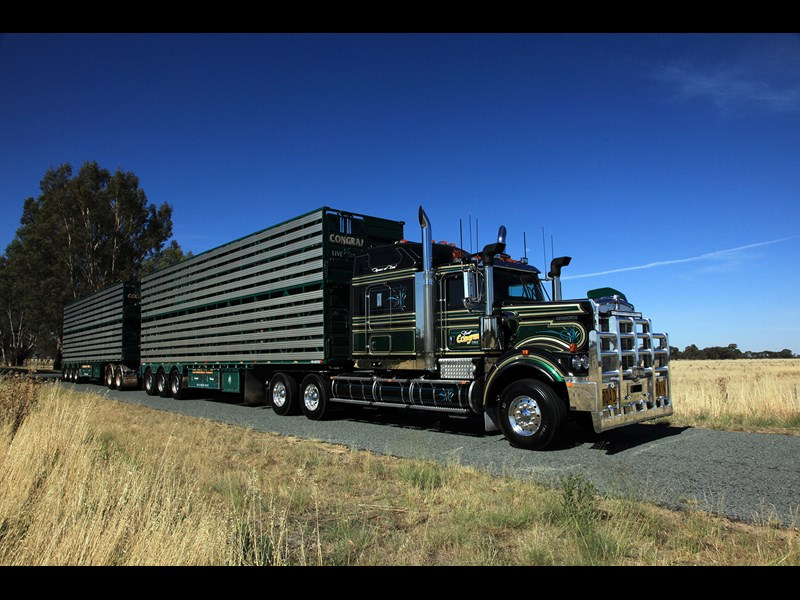 Scott Congram's Kenworth C509 carts sheep and cattle in and out of the Riverina.