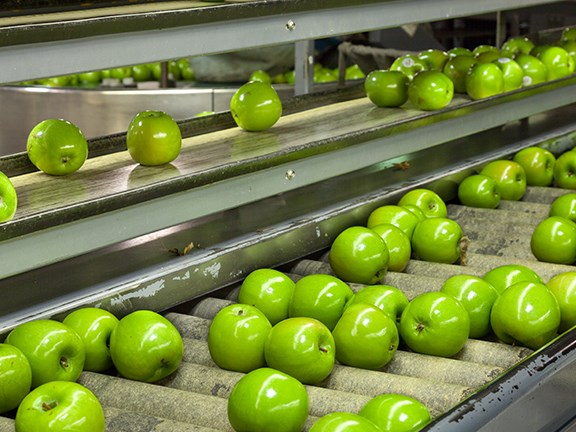 Apples on a conveyor belt