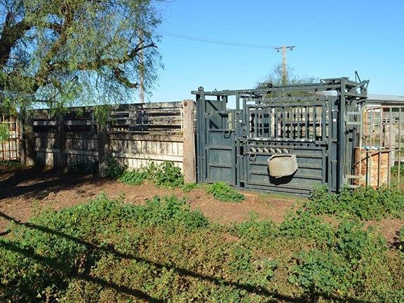 Enterprise cattle gate