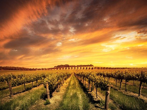 The Australian Competition and Consumer Commission (ACCC) has invited farmers in the horticulture and viticulture industries to participate in a series of regional workshops in each state.