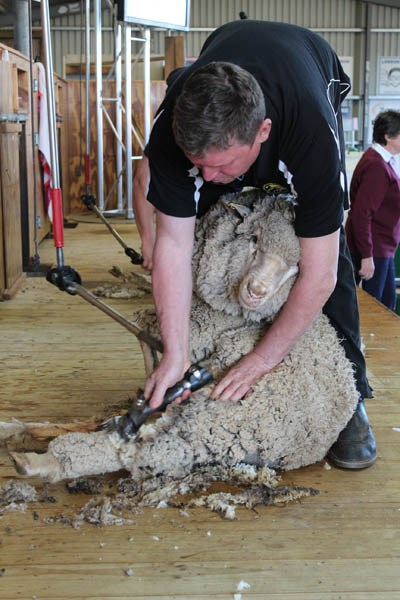 Elmore Field Days 2015 wool shearing 2