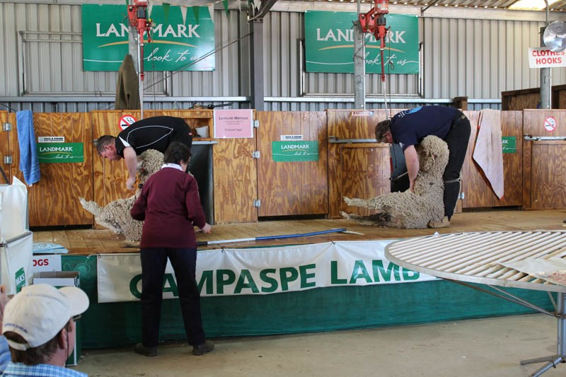 Elmore Field Days 2015 wool shearing