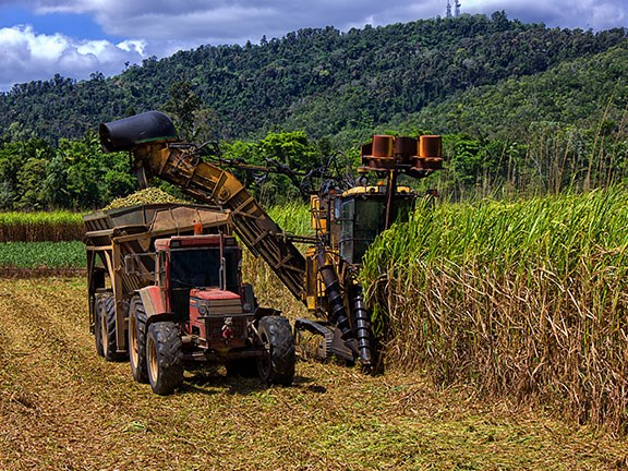 Fertiliser used in sugar cane farming contributes to nitrogen runoff.