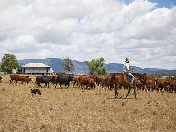 The New South Wales Budget has been met with a mixed reaction from farming industry groups within the state.