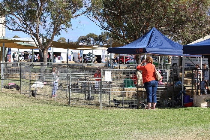 Wimmera field days animal farm