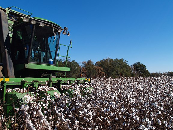 There are number of simple ways to prevent injury while working on cotton farms.