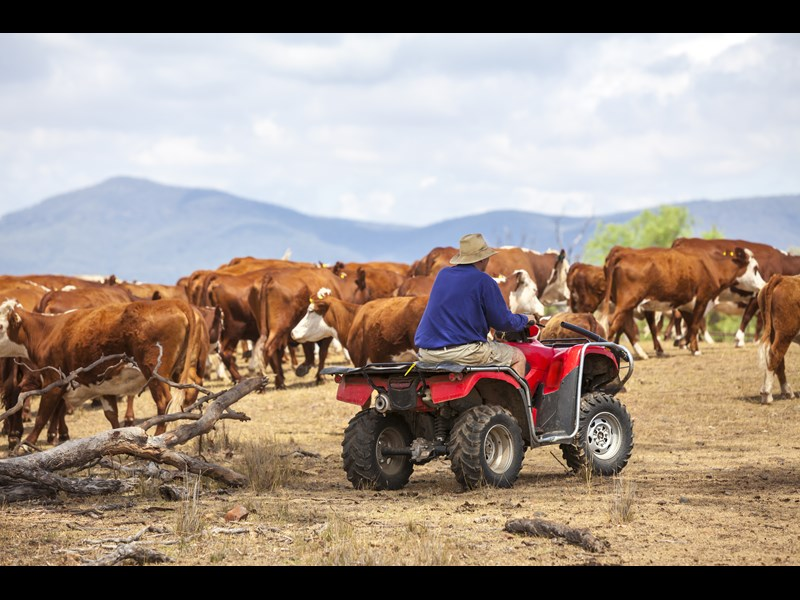 Quad bike safety is under review by Queensland's accident research body.