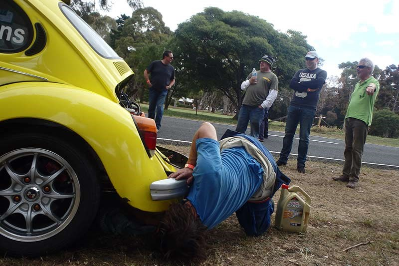 torrens beetle 3