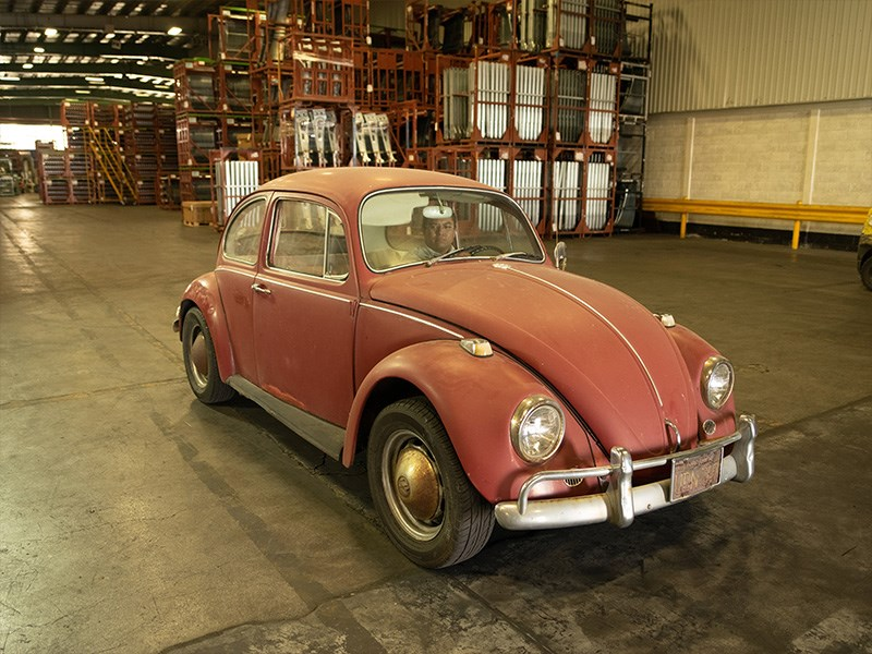 Annie the Beetle before