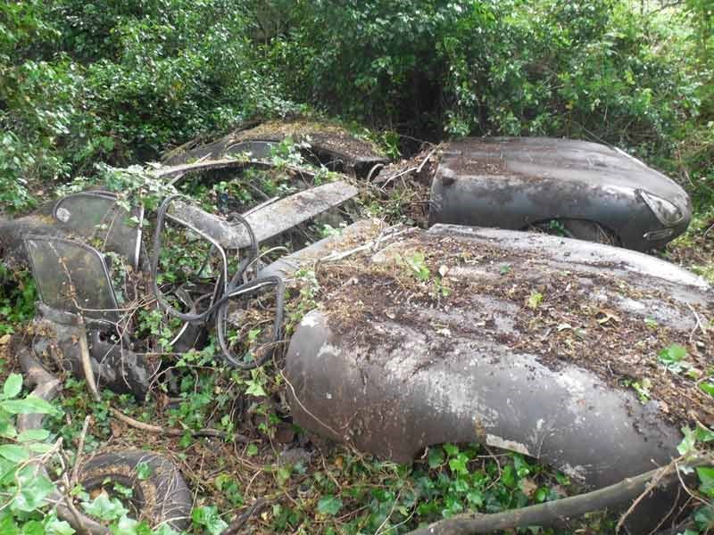 Jaguar E type hedge find