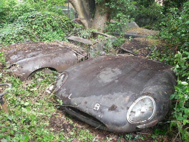 Jaguar E type hedge find 2