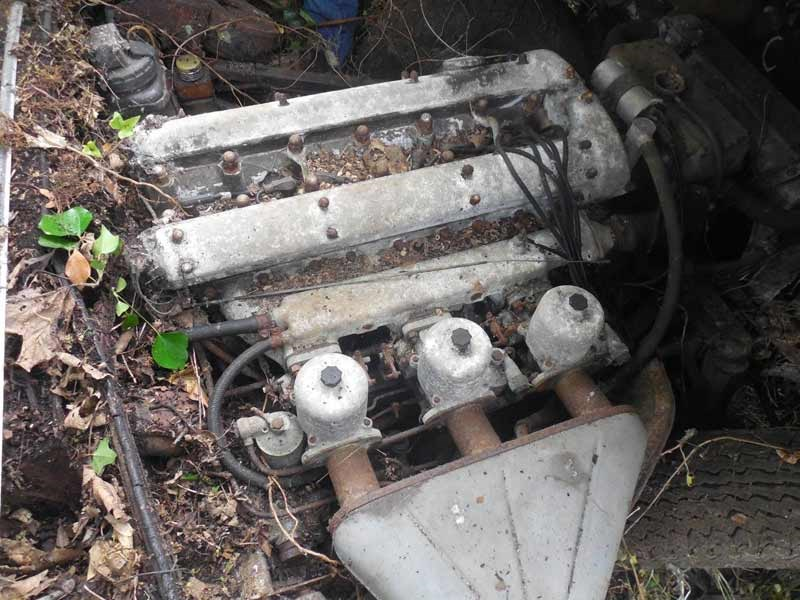 Jaguar E type hedge find 4