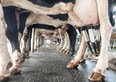 Fact sheet helps dairy farmers plan future