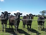 NZ dairy and deer through to agri-business award finals