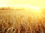 ANZ sees greener pastures ahead for Australia's grain industry.