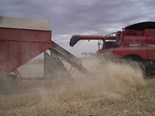Wheat farmers use alternative methods like modifying chaff carts to eliminate weeds