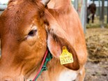 Livestock supply chain under safety review