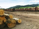 Northland forestry: trucks vs rail