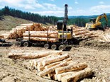 The professional logging contractor