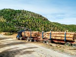 Log exports restricted by COVID-19