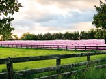 Pink bales for breast cancer awareness strike a chord overseas