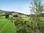 DairyNZ and NIWA work on productive riparian buffers