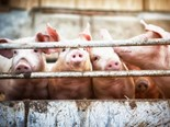 African swine fever reshaping global beef markets