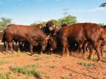 Global Farming: Botswana beef farming