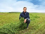 Growing alfalfa as an alternative to grass