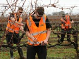 Green light for 2020 Corteva NZ Young Viticulturist of the Year competition