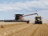 Guinness World Records™ title: Highest Wheat Yield