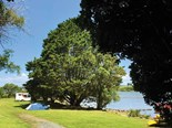 Appreciating nature at Aroha Island