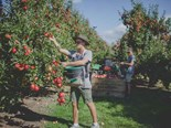 Hawke's Bay campaigns to help apple industry