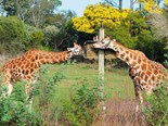 Visiting Orana Wildlife Park