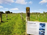 Kerikeri the birthplace of New Zealand wine
