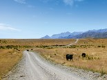 Exploring South Island's iconic sheep and cattle stations