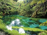 Jackie's Journey: Putaruru's Blue Springs