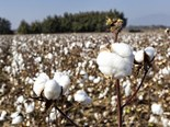 Cotton; organic farming sectors tipped to soar in 2016