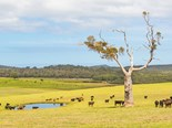 ANZ report finds beef at crossroad