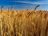 CSIRO says climate change will reduce crop yield