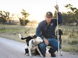 Farm dogs battle it out for Cobber Challenge glory