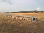 New pastures for Shepherd