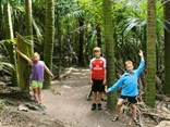 Nikau Palm grove on the Tawa Loop